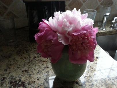 Peonies in Celadon vase